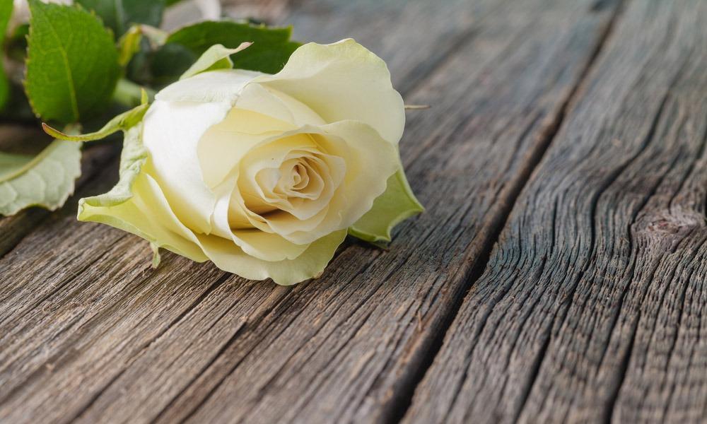 Trámites jurídicos, apoyo psicológico, traslado del difunto. Son muchos los servicios de una funeraria son muchos los servicios que ofrece una funeraria actualmente. En este post te los detallamamos.
